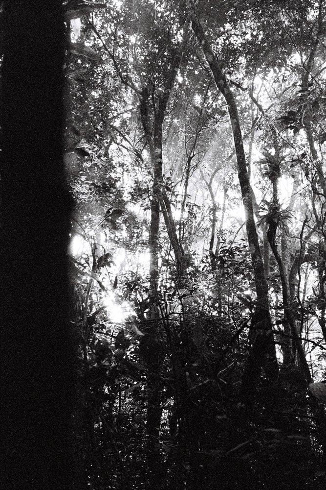 Quête de vision Guarani Brésil 2015